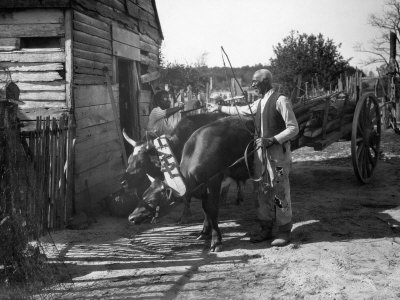 Man Tends to an Ox Team Outside a Country Store Photographic Print
