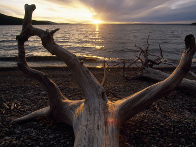 Driftwood Along the Shoreline of Yellowstone Lake