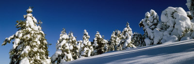 Snow Covered Fir and Larch Trees on a Landscape, French Riviera, Provence-Alpes-Cote D