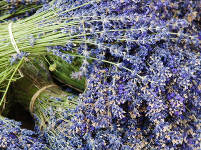 Lavender Bundles for Sale in Roussillon, Sault, Provence, France