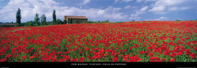 Tuscany, Field of Poppies