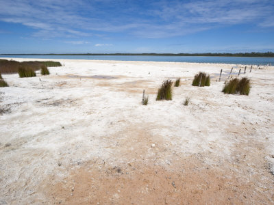 Salt and Algal Deposits at Lake Clifton, Yalgorup National Park, Mandurah, Western Australia