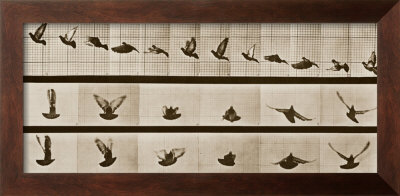 Bird,Eadweard  Muybridge