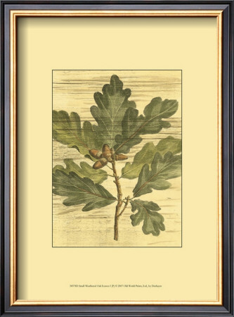 Weathered Oak Leaves I