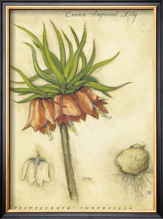Crown Imperial Lily Framed Art Print