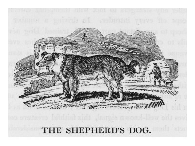 Bewick Shepherds Dog