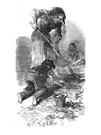 The Irish Potato Famine. Children Searching for Potatoes
