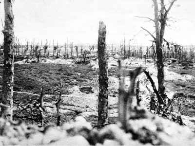 The Destroyed Wood of Thiepval, France