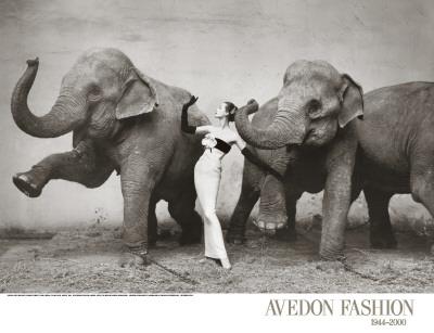 Dovima with Elephants, c.1955 Art Print