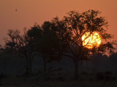 Sunset in the Okavango Delta Area of Botswana