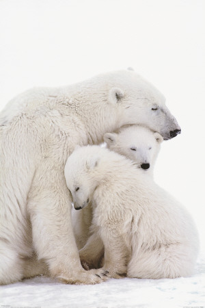 Polar Bear Family,