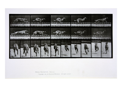 Greyhound Running, Plate 708 from
