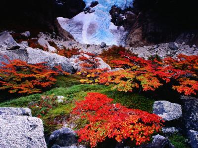 Autumnal Foliage Beneath the ...