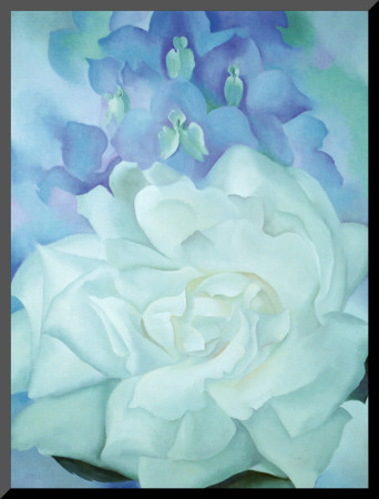 White Rose with Larkspur - Mounted Print