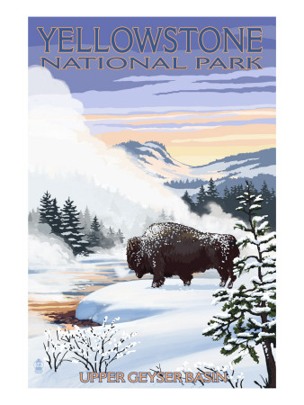 Bison Snow Scene - Yellowstone National Park