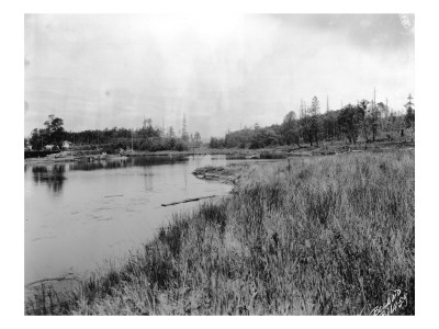 Marshland in Washington, Circa 1925