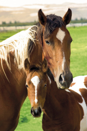 Horses - Mare &amp; Foal Poster