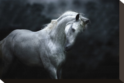 Moonlight Silver Stallion