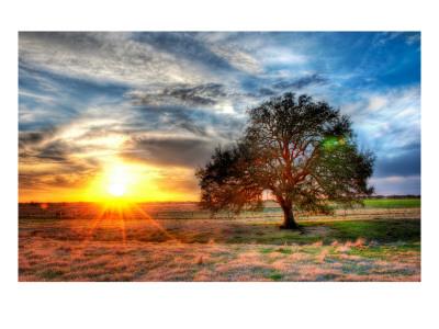 'A Sunset on a Texas Farm' by Trey Ratcliff