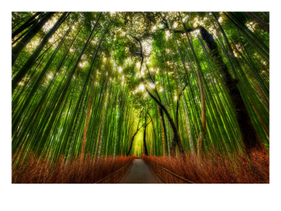 'The Bamboo Forest' by Trey Ratcliff