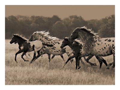 Appaloosa Run