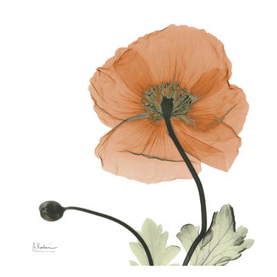 A Gift of Flowers in Orange - Art Print