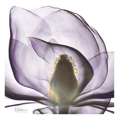 Precious Orchid in Purple Close - Art Print