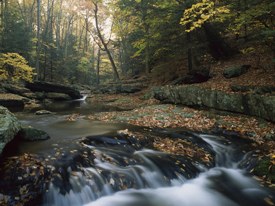 Small Waterfall on Hunting Creek in Fall, Catoctin Mountain Park, Maryland Posters