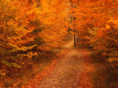 Unpaved Road in Autumn