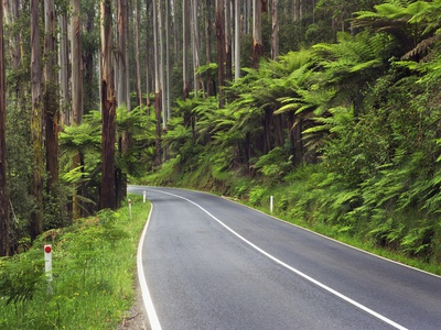 Road in Australian Rainforest