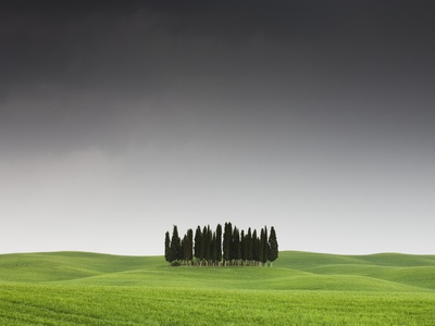 Cypress Grove in Field