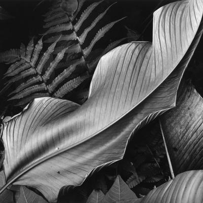 Leaf, 1979