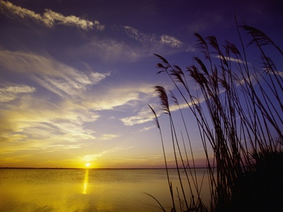 Sunset on the Barnegat Bay and Sea Oats - art.com