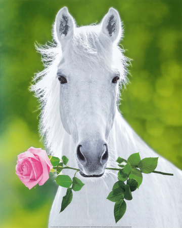 White Horse (Holding Pink Rose) Art Poster Print