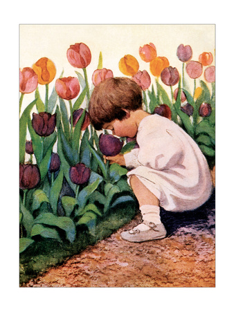 Tulip Time - Art Print