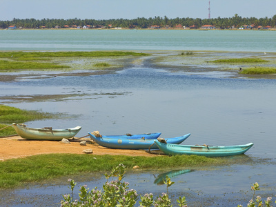 Canoes by Arugam Lagoon, known for its Wildlife, Pottuvil, Arugam Bay, Eastern Province, Sri Lanka,