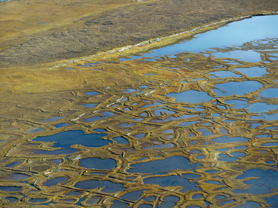 Patterned Ground Polygons and Kettle Ponds on the Coastal Plain Tundra
