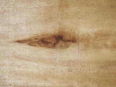 Close-Up of Balsa Wood (Ochroma ...