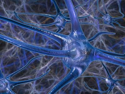 Biomedical Illustration of Neurons
