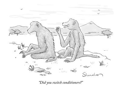 """Did you switch conditioners?"" - New Yorker Cartoon"