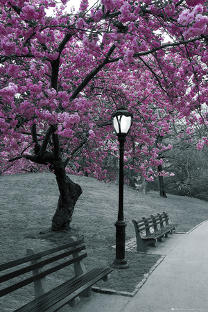 Central Park-Blossom Poster