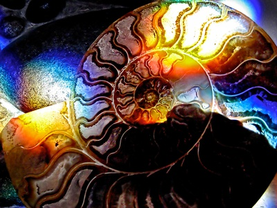 Ammonite and Rainbow