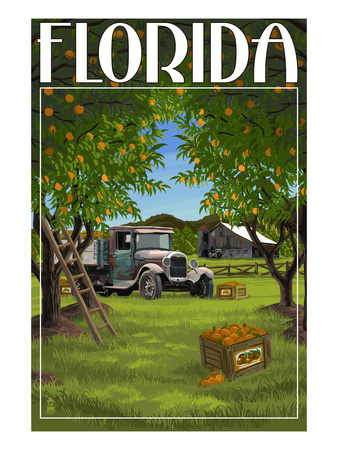 Florida - Orange Grove with Truck