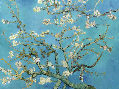 Almond Branches in Bloom, San Remy, c.1890 Art Art Print