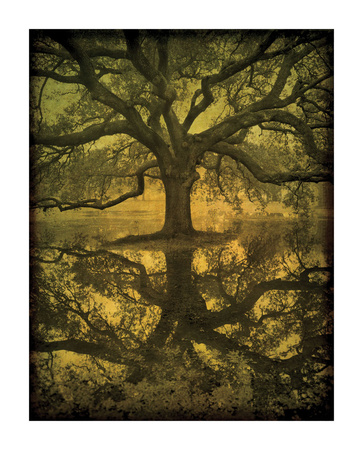 Audubon Oak Reflection