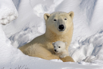 Protective Mother and Cub