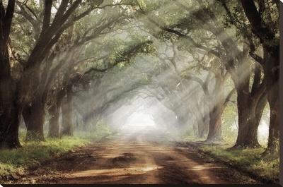 Evergreen Plantation - Stretched Canvas Print