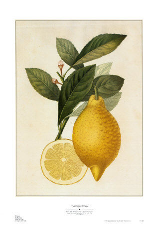 Tuscany Citrus I - Art Print