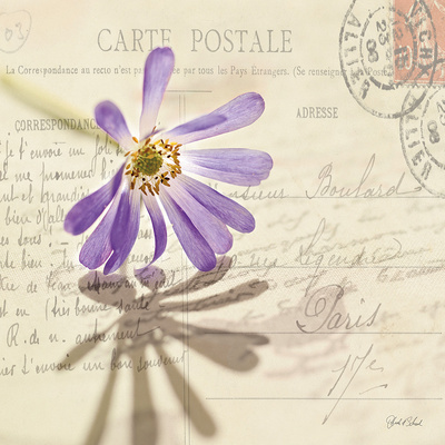 Purple daisy flower and vintage postcard from Paris with stamps and glorious white light