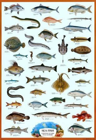 Fish encountered mediterranean descriptions include names for 7 fishes list